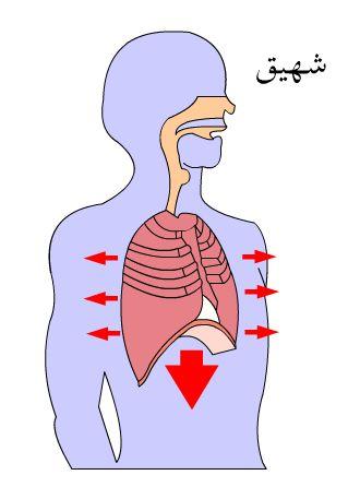 شرح عملية التنفس بالفلاش