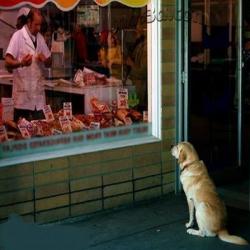 قصة الكلب والجزار