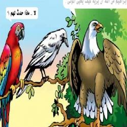 حكاية الطيور الأربعة
