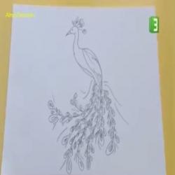 سكتش - رسم طاووس