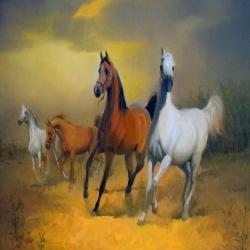 قصة أنساب الخيول