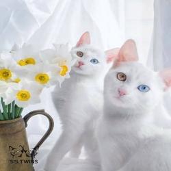 صور أجمل قطط في العالم