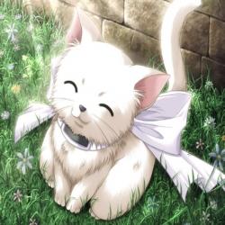 قصة القطة الجميلة