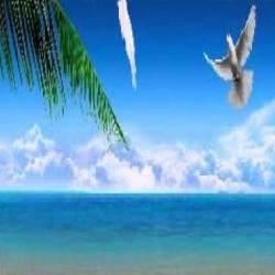 حكاية الطيور والبحر