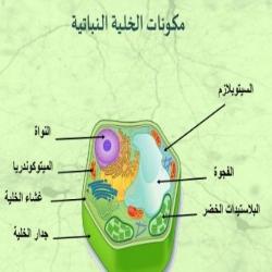 تركيب الخلية النباتية