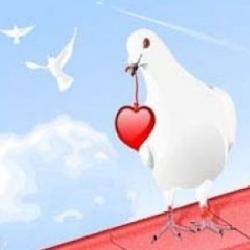 قلوب الحمام .. انشودة مكتوبة للاطفال بقلم مريم الكرمي