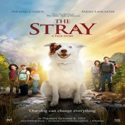 فلم الدراما العائلي الكلب الضال The Stray 2017 مترجم للعربية