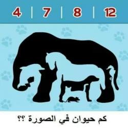 مسابقة تركيز .. كم عدد الحيوانات الصورة ؟؟